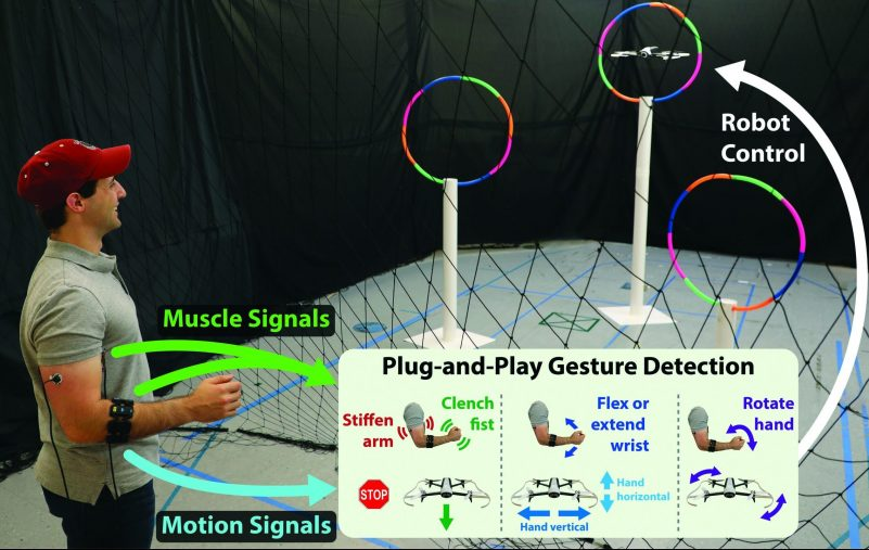 Plug-and-Play Gesture Control Using Muscle and Motion Sensors
