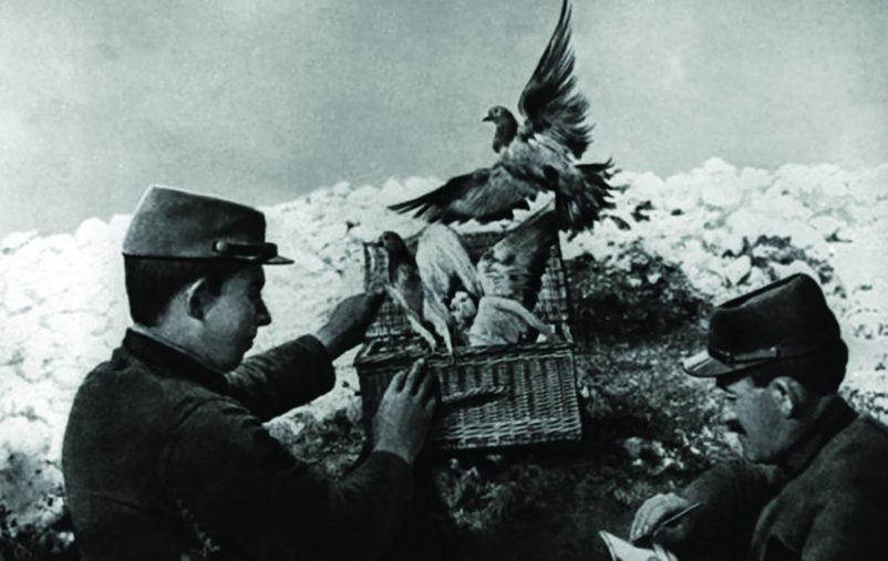 طيور التجسس (5)