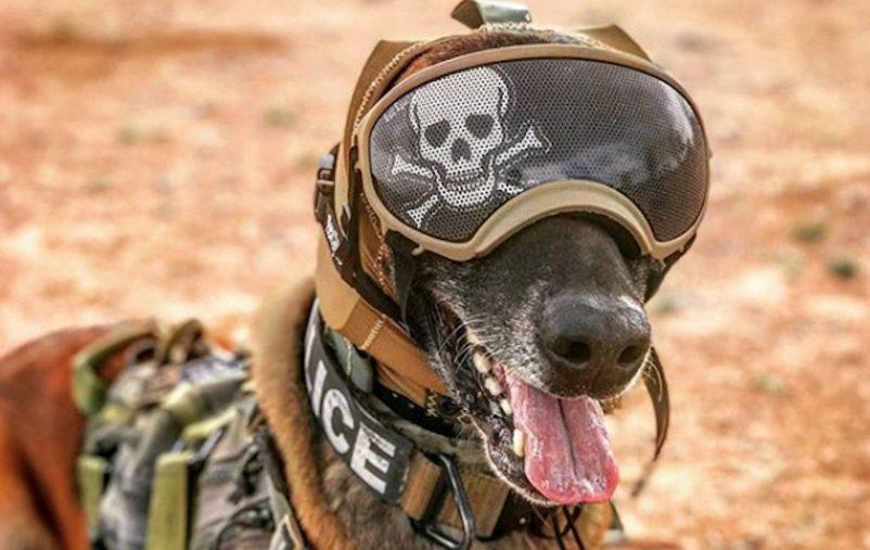 نظارات بتقنية الواقع المعزز للكلاب العسكرية (2)