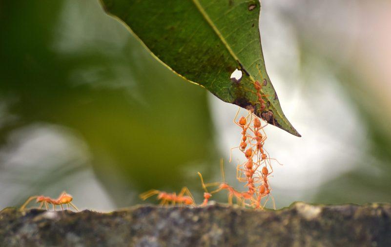ants-4503110